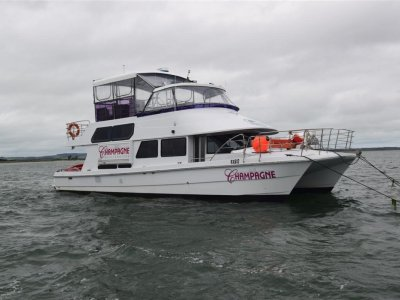 Cougar Cat 15 Flybridge