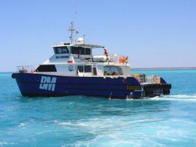 Global Marine 19.8m
