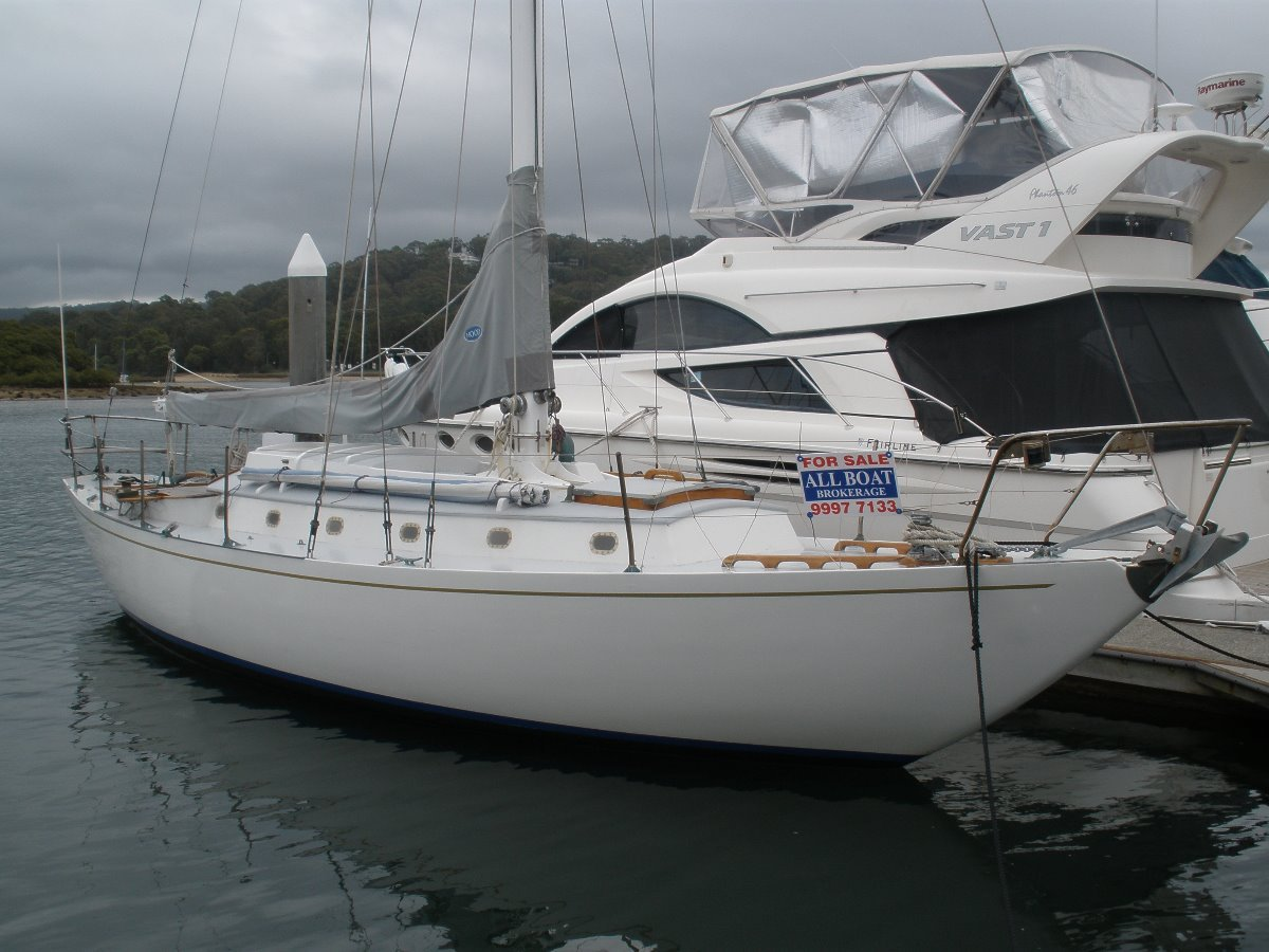Tasman Seabird