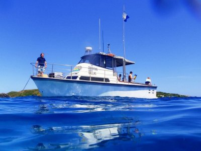 Savage 33 Savage 33 2c nsw Dive and Fishing Charter vessel