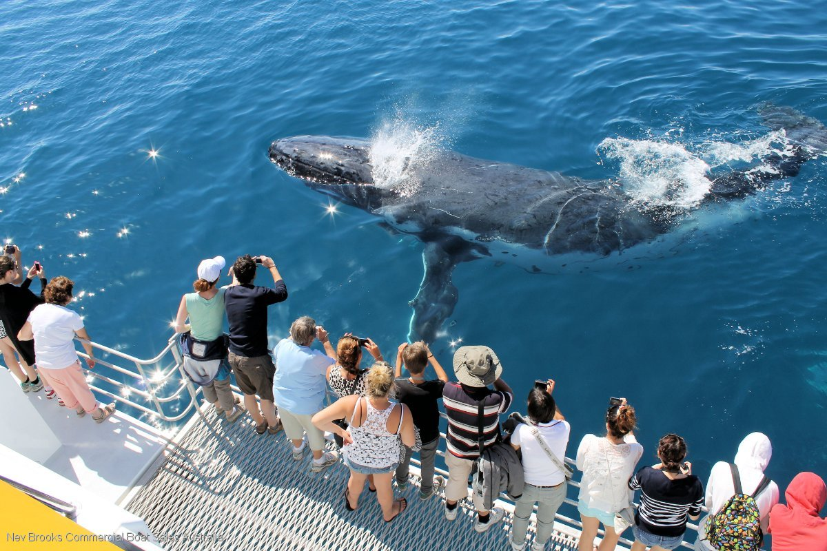 Streamline Passenger Ferry - Whale Watching Catamaran