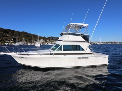 Bertram Caribbean 31 Flybridge