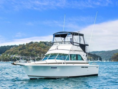 "Bertram Caribbean 31 Flybridge Cruiser ""Hit the Reef"""