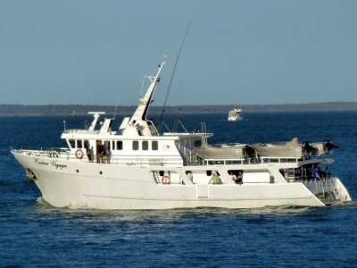 Reef Fishing Charters Queensland- Click for more info...