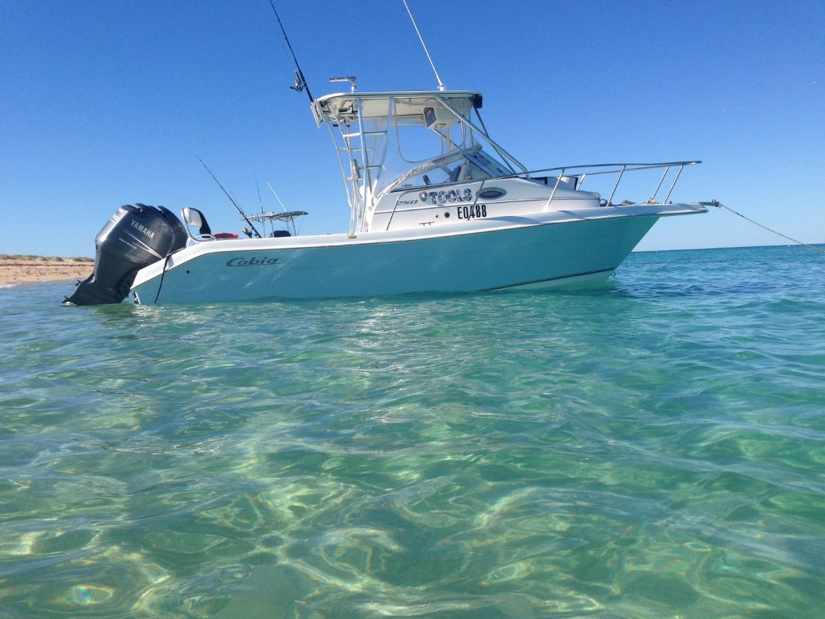 Cobia 250 Walk Around