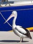 10m berth A11 Tin Can Bay Marina