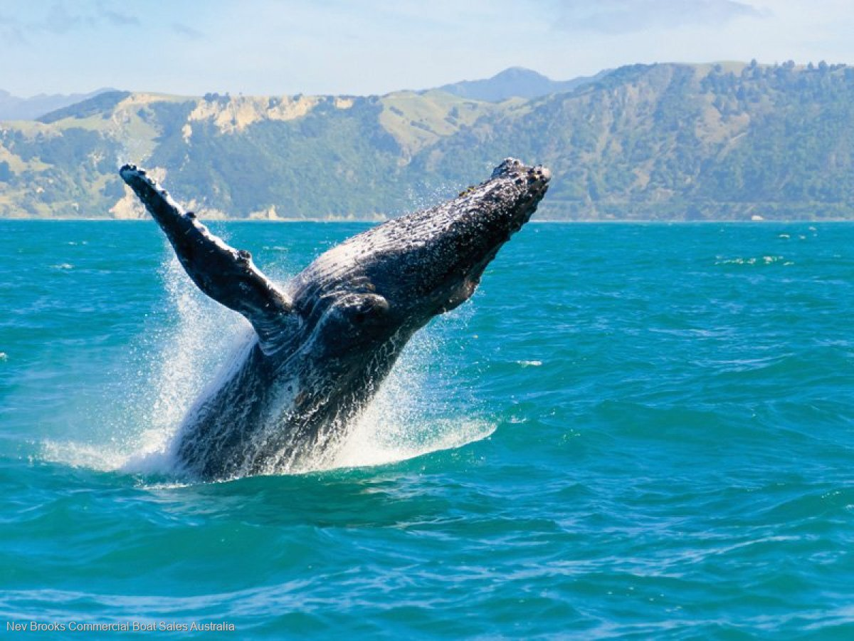 WHALE WATCH PERMIT