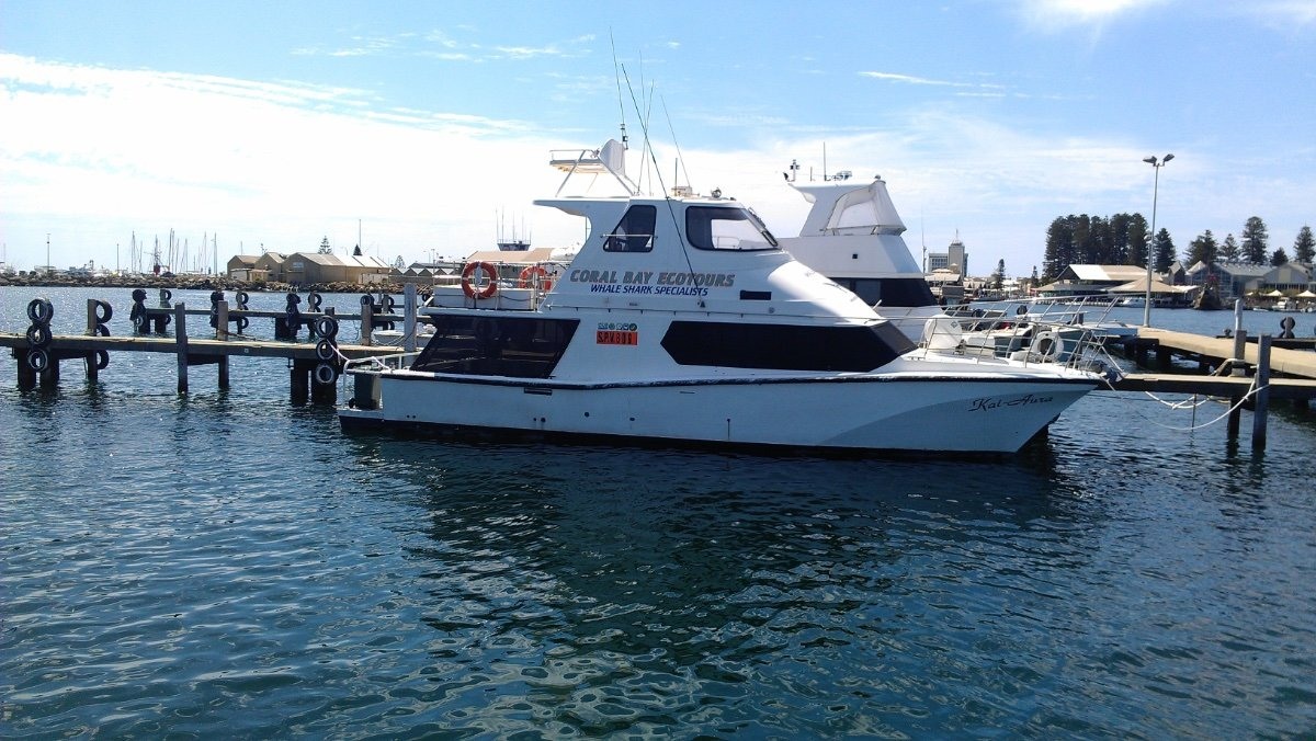 Cougar Cat 15.0 Flybridge 1C Survey Charter Vessel