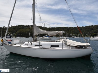 Currawong 30