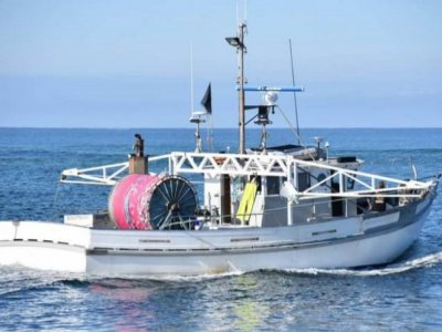 Fishing Shark Boat