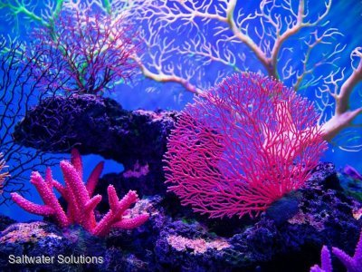 Coral Quota available to lease 1/3 Speciality 2/3 Other $25k+GST/ton