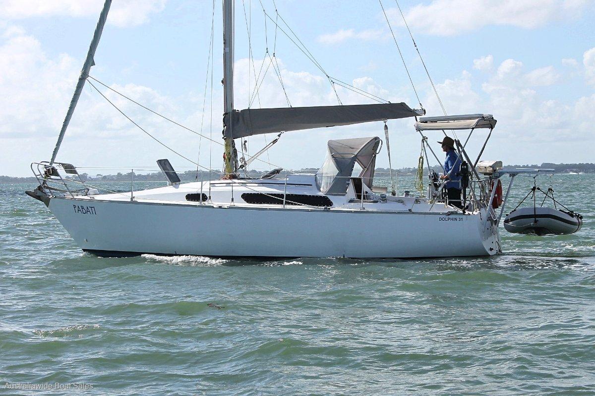 Dolphin 31