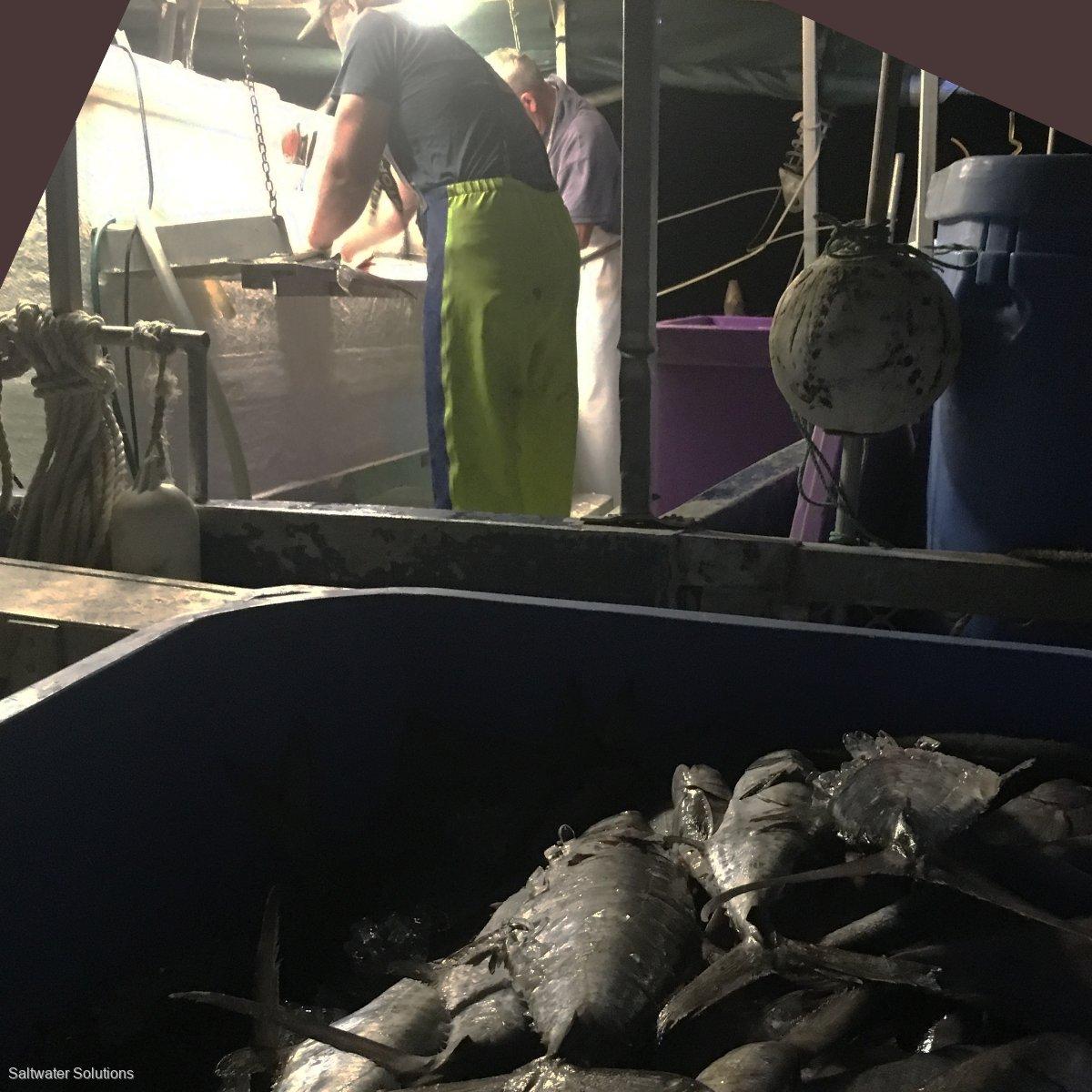 Gulf Grey Mackerel and Barra Licence