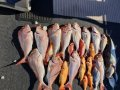 Star Aluminium Fishing FULL COMMERCIAL WETLINING PACKAGE AVAILABLE