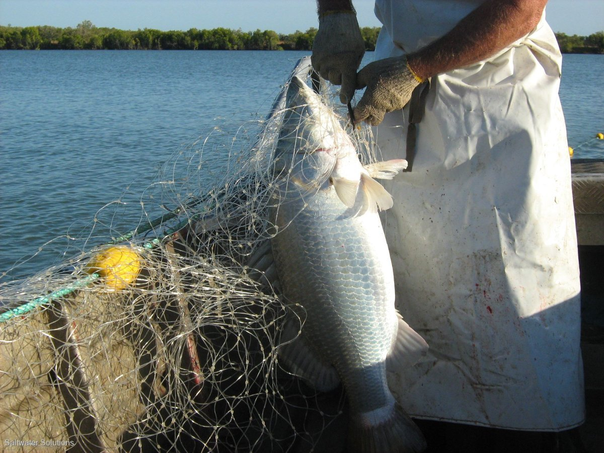 For sale: Gulf Barra Licence N3, L3(1): good inshore history $90K + GST