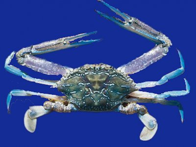 Small parcels of Sand Crab quota available will sell or swap