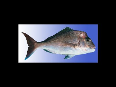 L1(1) and W2 primary commercial fishing licence for lease