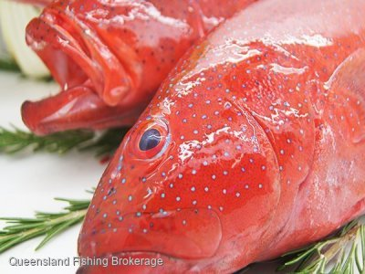 Wanted - Queensland Coral Trout Quota