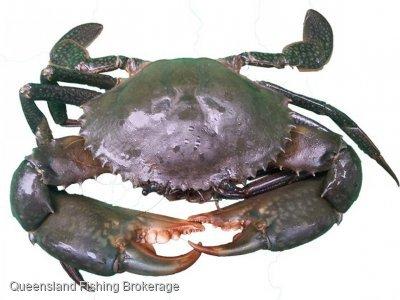 LS560 Queensland East Coat Mud Crab Quota