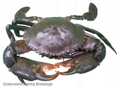 LSWanted - 1000kg of Queensland East Coast Mud Crab quota wanted to lease