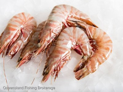 Queensland Central Zone Trawl Effort Units Wanted