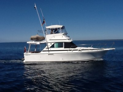 Bertram 35 Flybridge